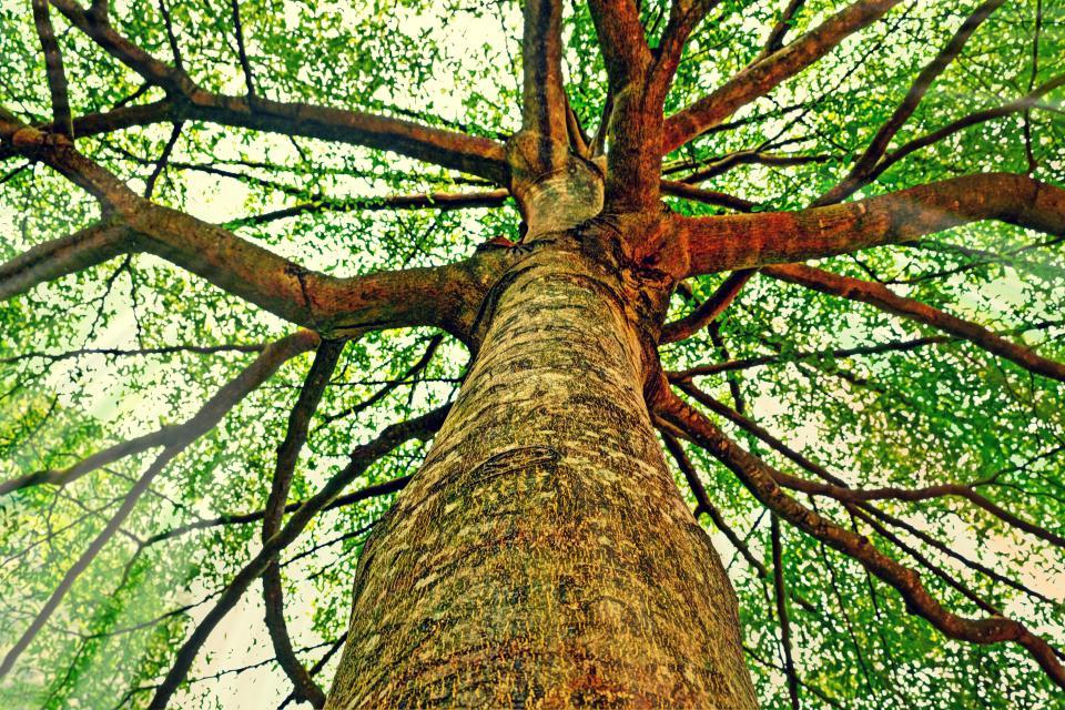 danist Soh - Tree